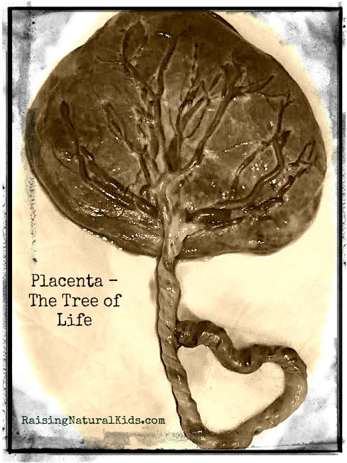 placentafixed